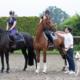 Animalytics, Pferd, Hund